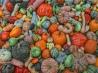 Солнечная ягода: блюда из тыквы