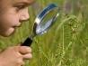 Мир вокруг ребенка: знакомство с природой